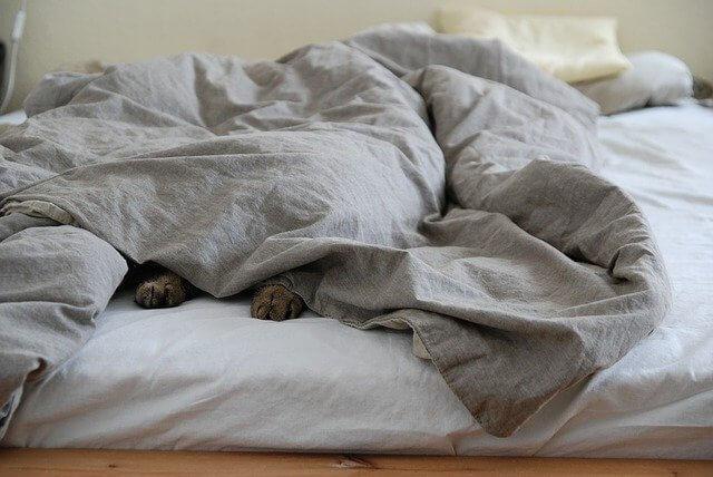 Sovande katt under täcke